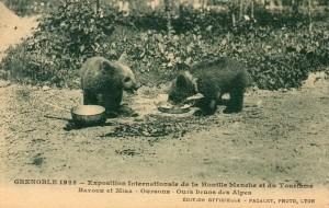 Ours lors d'une exposition internationale