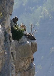 Habitat dans la falaise