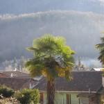 Seix. Les palmiers du château