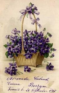 2violettes panier