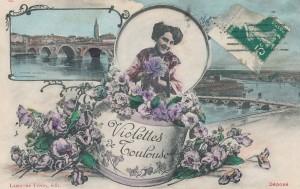 Violettes de Toulouse