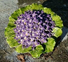 Les violettes du cimetière de Seix