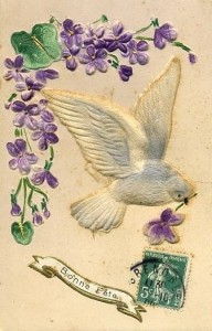 violettes carte oiseau
