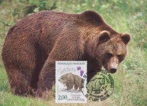 Ours brun des Pyrénées, ursus arctos