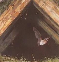 départ pour la chasse nocturne