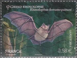 Grand Rhinolophe