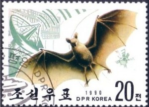 En Corée, la chauve-souris est associée au radar