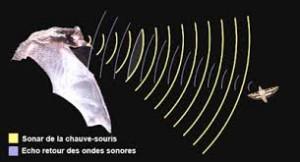 Le principe du sonar