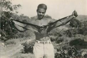 Nouvelle-Calédonie. Une roussette, ailes déployées