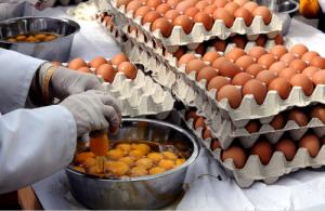 Préparation de l'omelette pascale