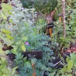 Le jardin. Plantes médicinales et aromatiques