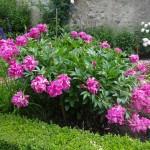 jardin de curé et ses espaces muséaux